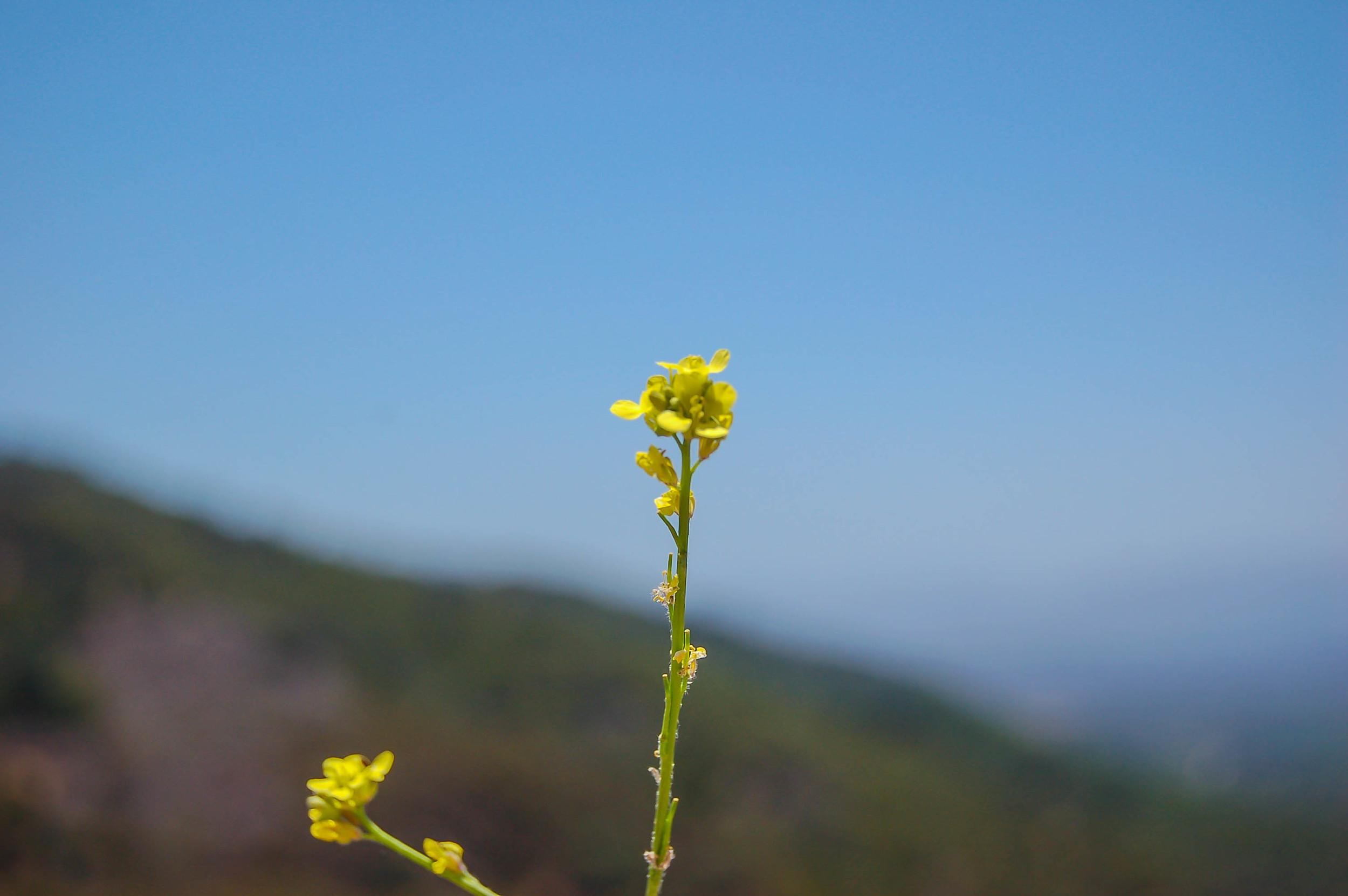 Roxyflower.jpg