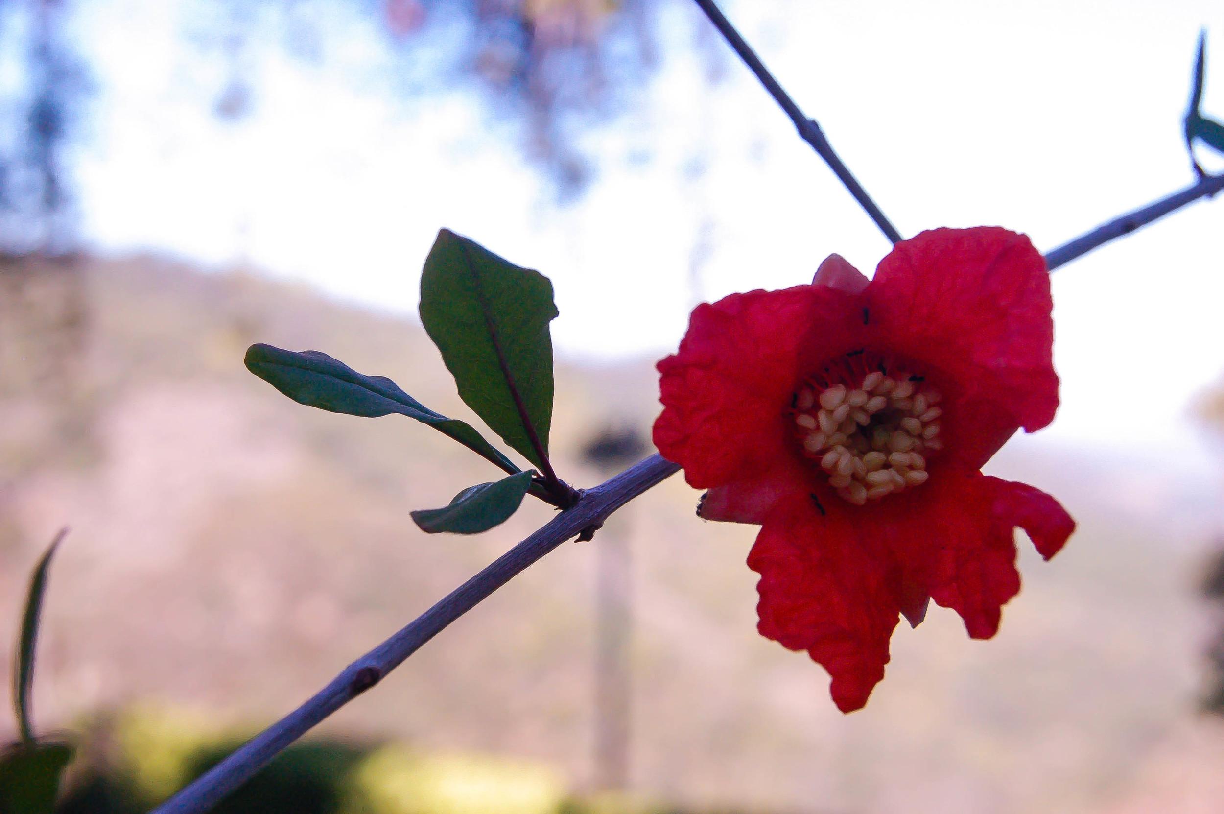 Roxyredflower.jpg