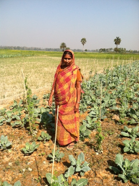 Another loan for vegetable cultivation.JPG