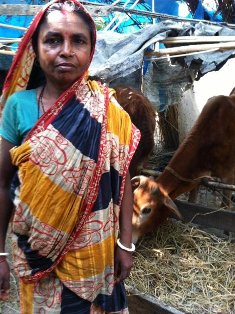 Cow Rearing.JPG