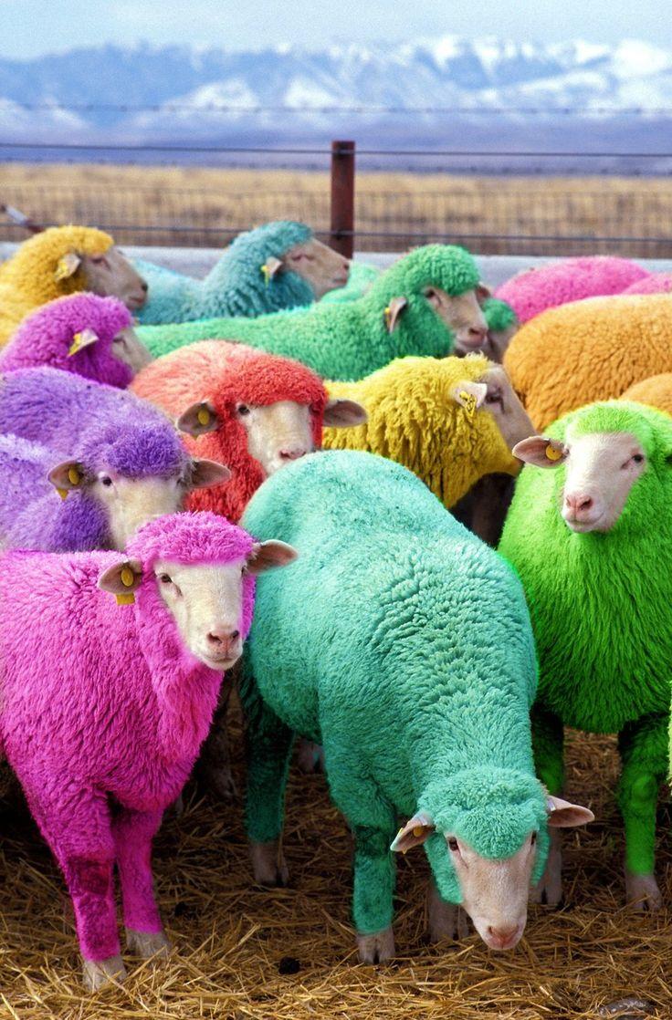 SHEEPS2.jpg