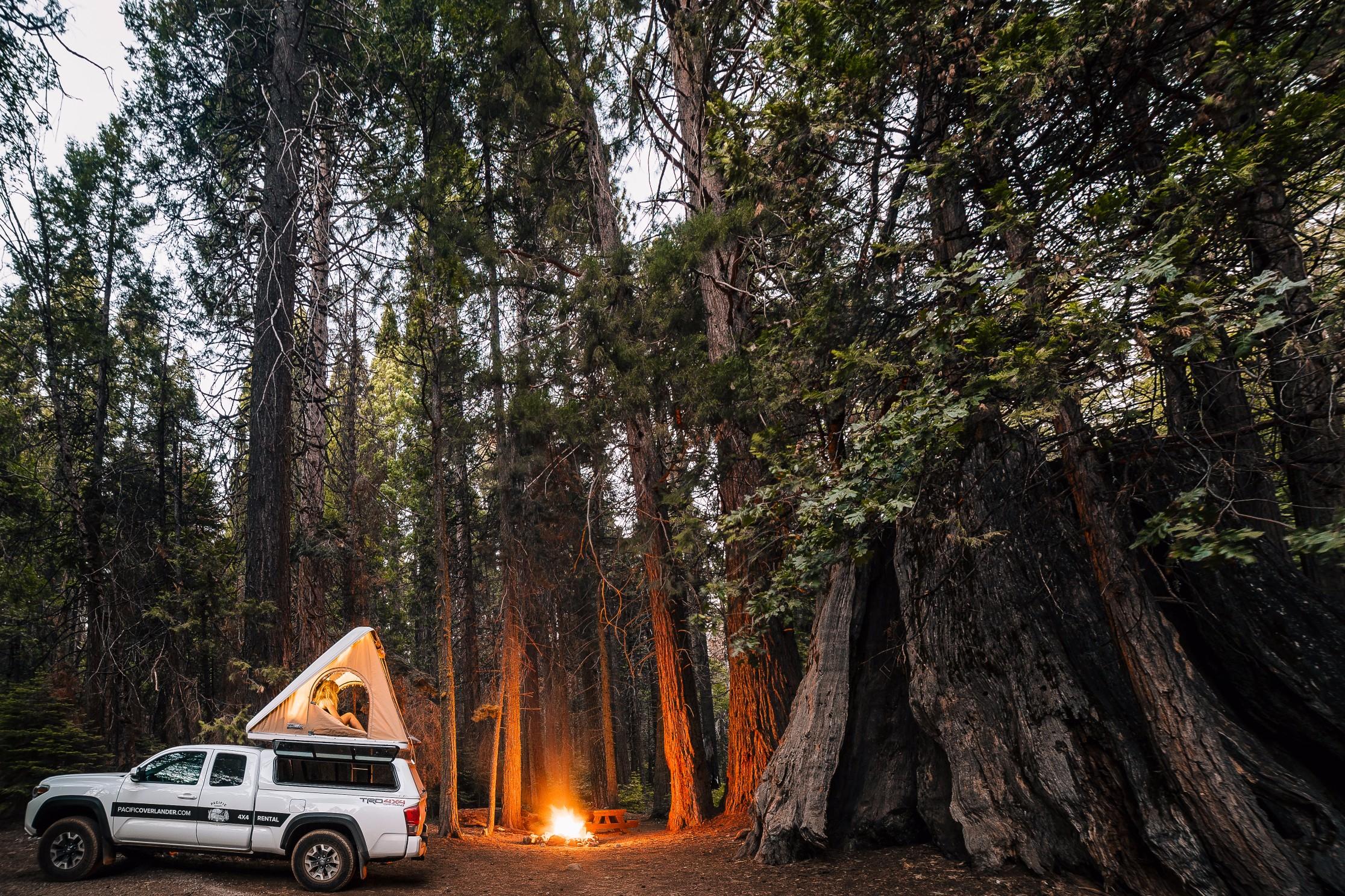 A sequoia tree dwarfs this hideaway campsite deep in the Sierra backcounty. Photo: @francisfaroli