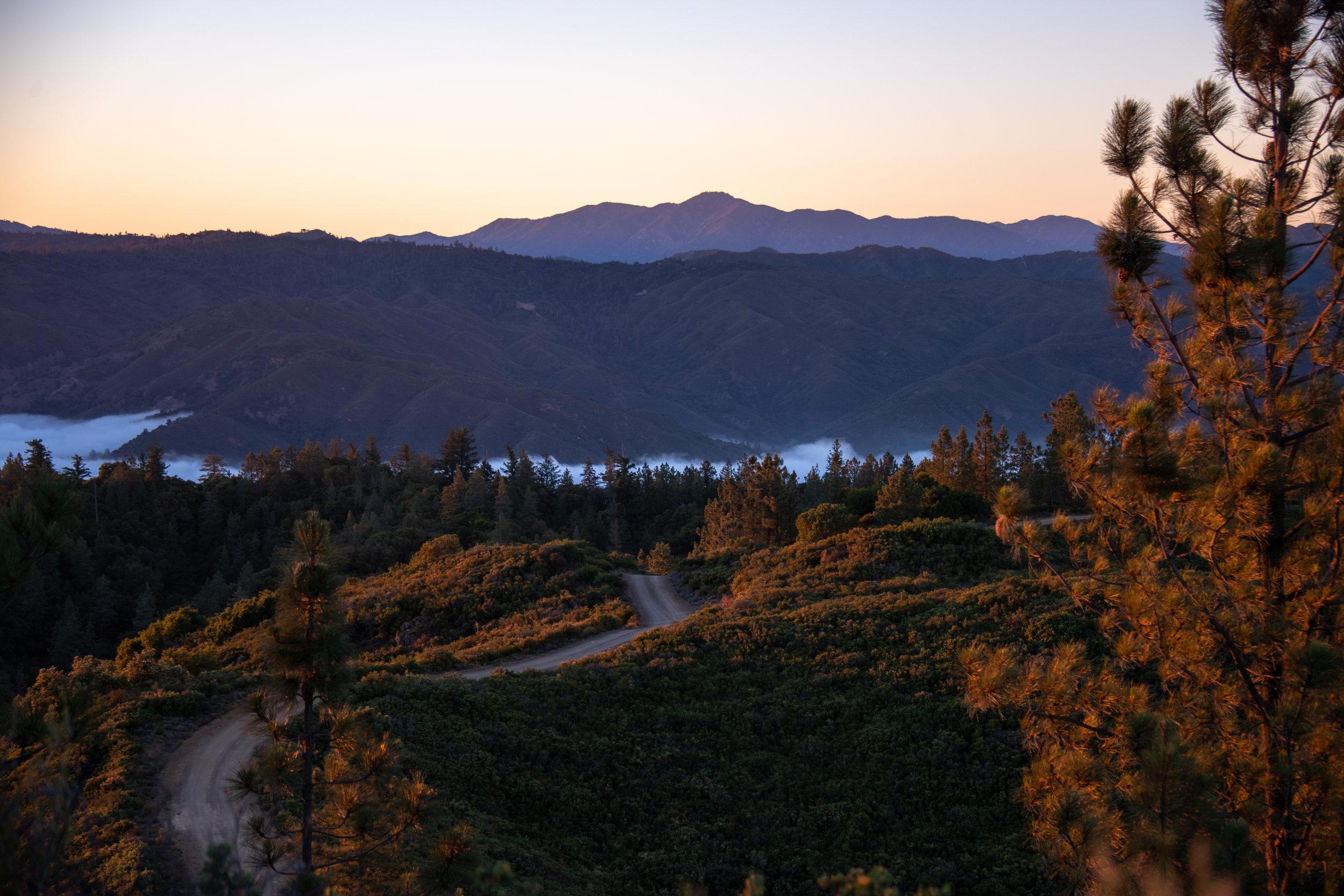Big Sur - San Martin Top (7) (1).jpg