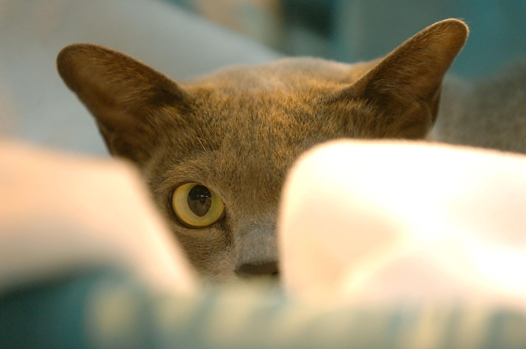 cats6 copy.jpg