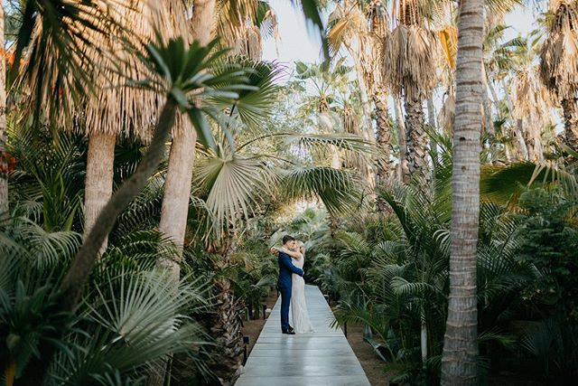 Married in a jungle. . . . Venue: @acrebaja @acre.wedding  Event Planning & Design: @eventsbybliss  H&MU: @blancbridalsaloncabo  Dress: @rachelgilbertau  Suit: @bonobos  Puppy Rescue: @acredogs . . #mexicowedding #destinationweddingmexico #mytinyatlas #mollymoormeier #mollymoormeierphotography #destinationweddingphotographer #darlingweekend #theknot #Acrebajawedding #sammigueldeallende #destinationmexico #weddinginspo #lovemexico #travelmexico #mexicoweddingphotographer #acrebaja #marthaweddings #ruffledwedding #cabowedding #eventsbybliss