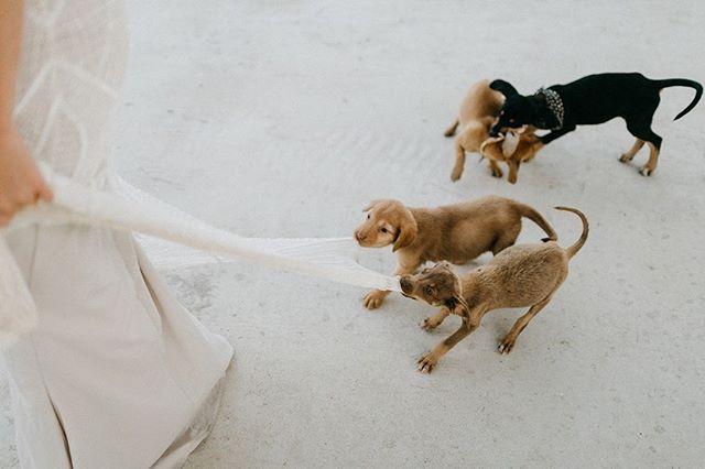 PUPPIES, am I right? Swipe for more cuteness. . Don't worry the bride was loving it. 🤣 . . #mexicowedding #destinationweddingmexico #mollymoormeier #mollymoormeierphotography #destinationweddingphotographer #darlingweekend #theknot #Acrebajawedding #sammigueldeallende #destinationmexico #weddinginspo #lovemexico #travelmexico #mexicoweddingphotographer #acrebaja #marthaweddings #ruffledwedding #cabowedding #eventsbybliss