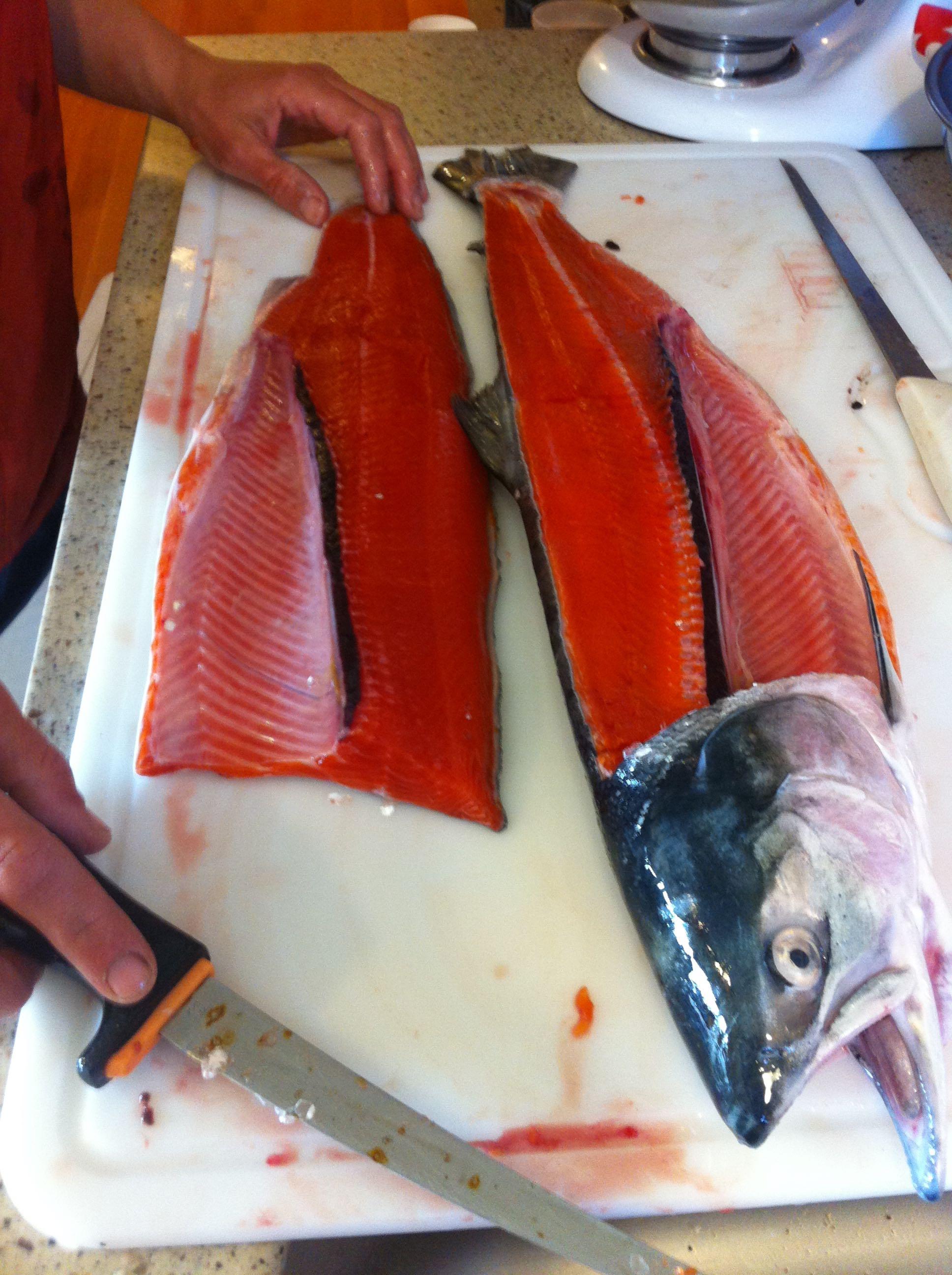 Filleting a sockeye salmon