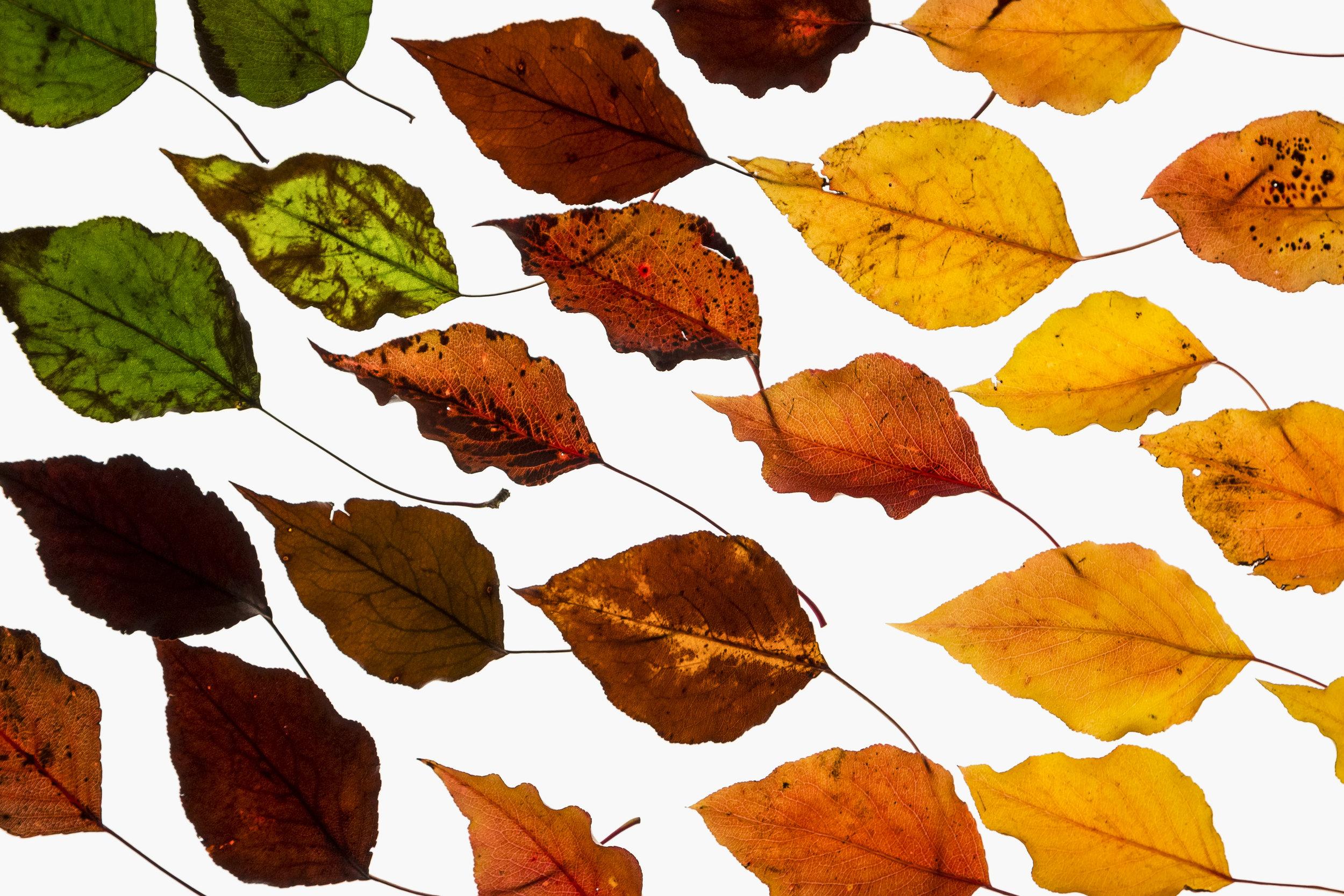 leaf-6.jpg