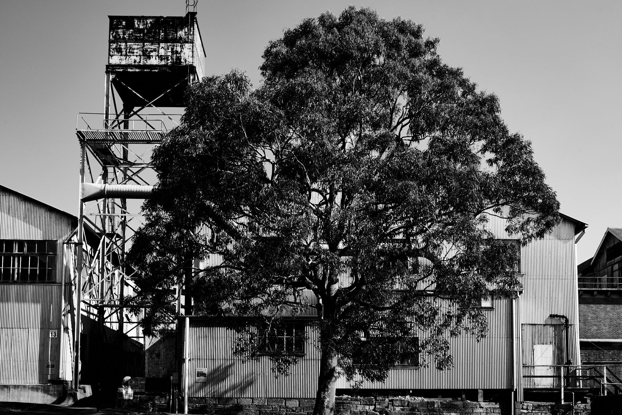 Untitled, Sydney, 2015