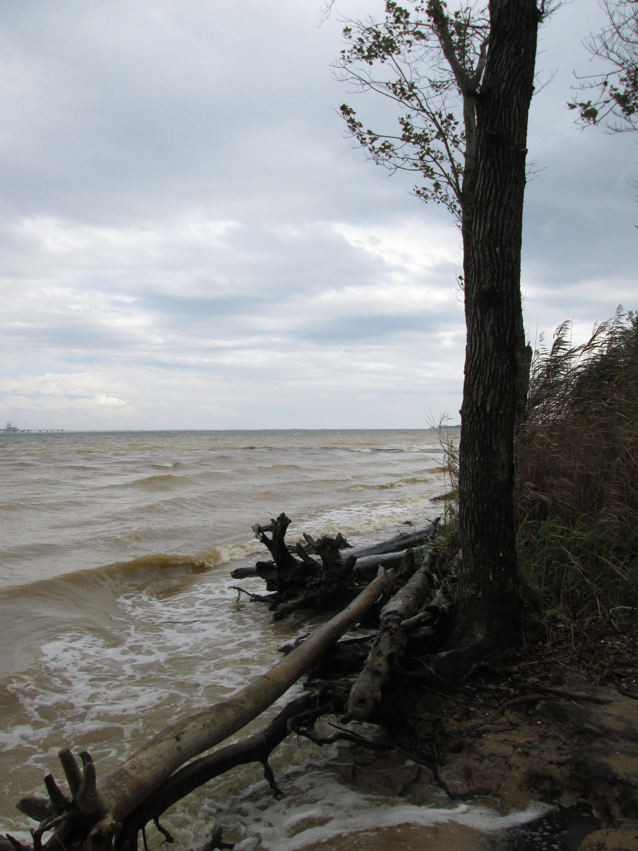 High Tide, Calvert Cliffs