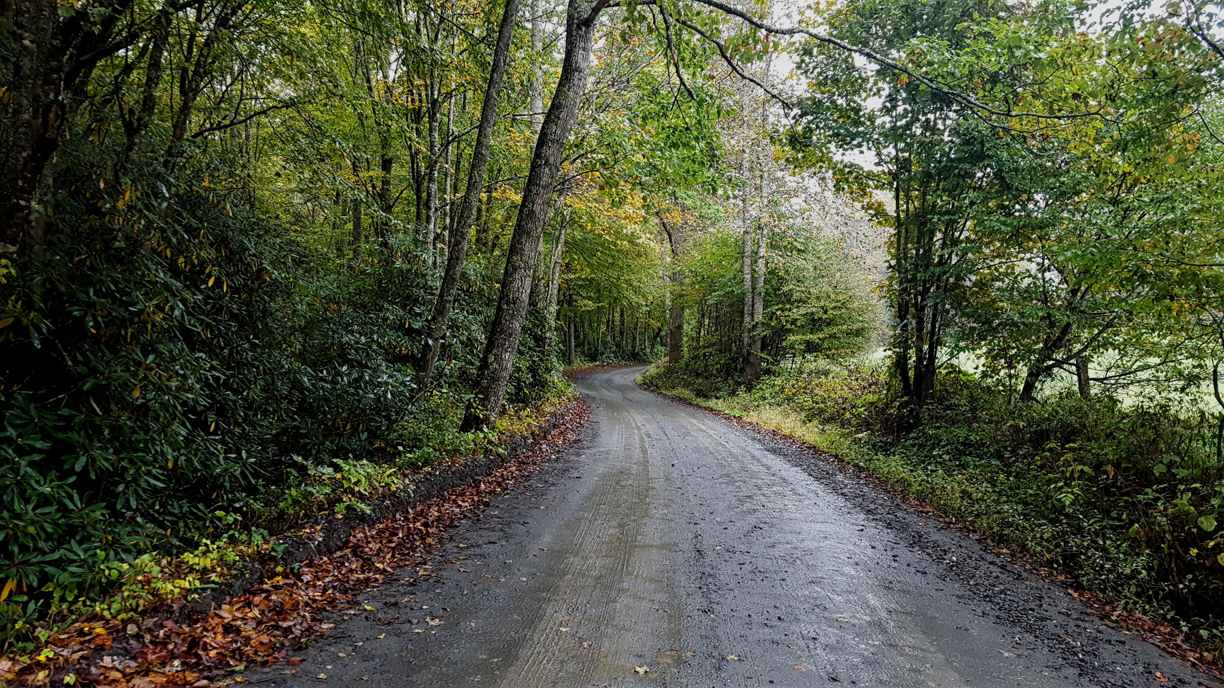 Rural Road in North Carolina
