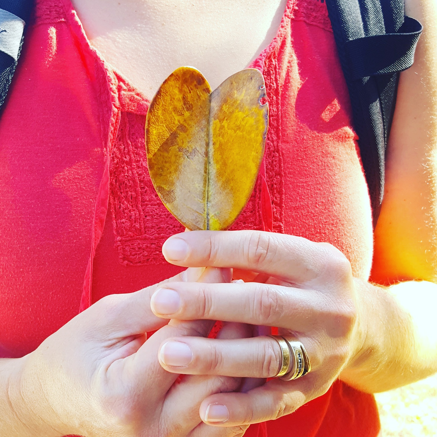 Sweet Magnolia Leaf