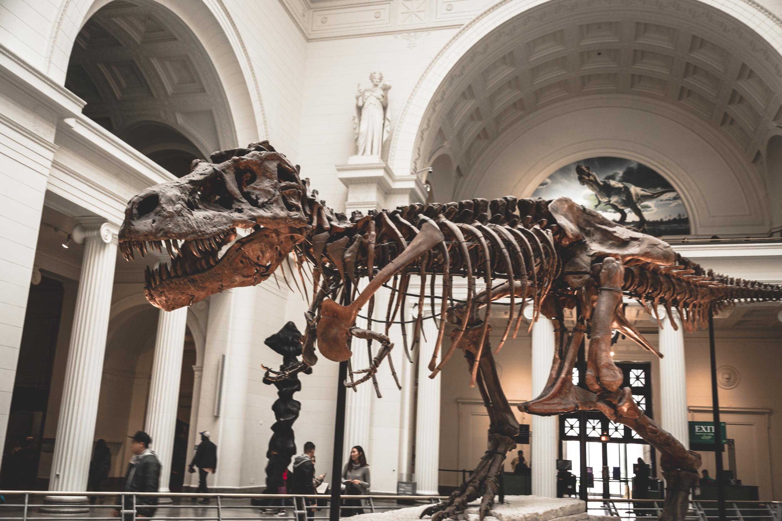 The Field Museum - Sue the Dinosaur