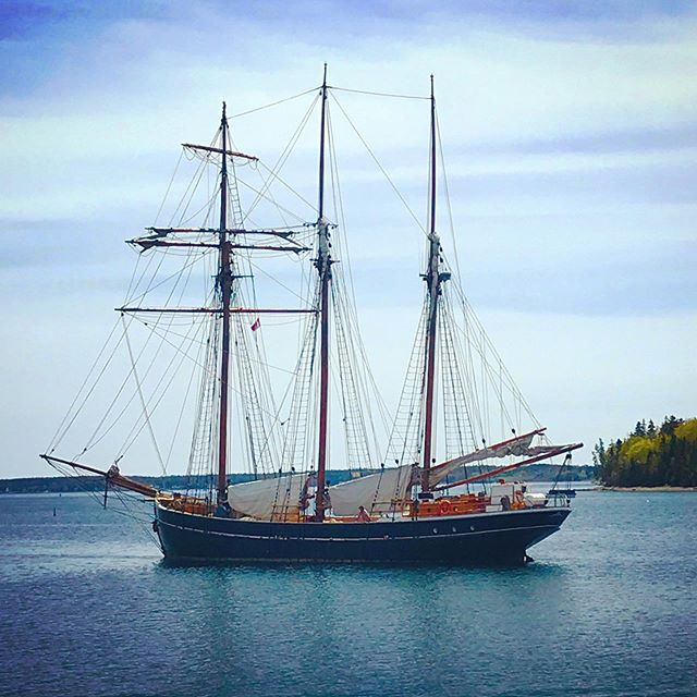 After watching this beauty come into the Lunenburg harbour today, I started to realize I might be getting a thing for boats. Somebody take me soon, yeah?