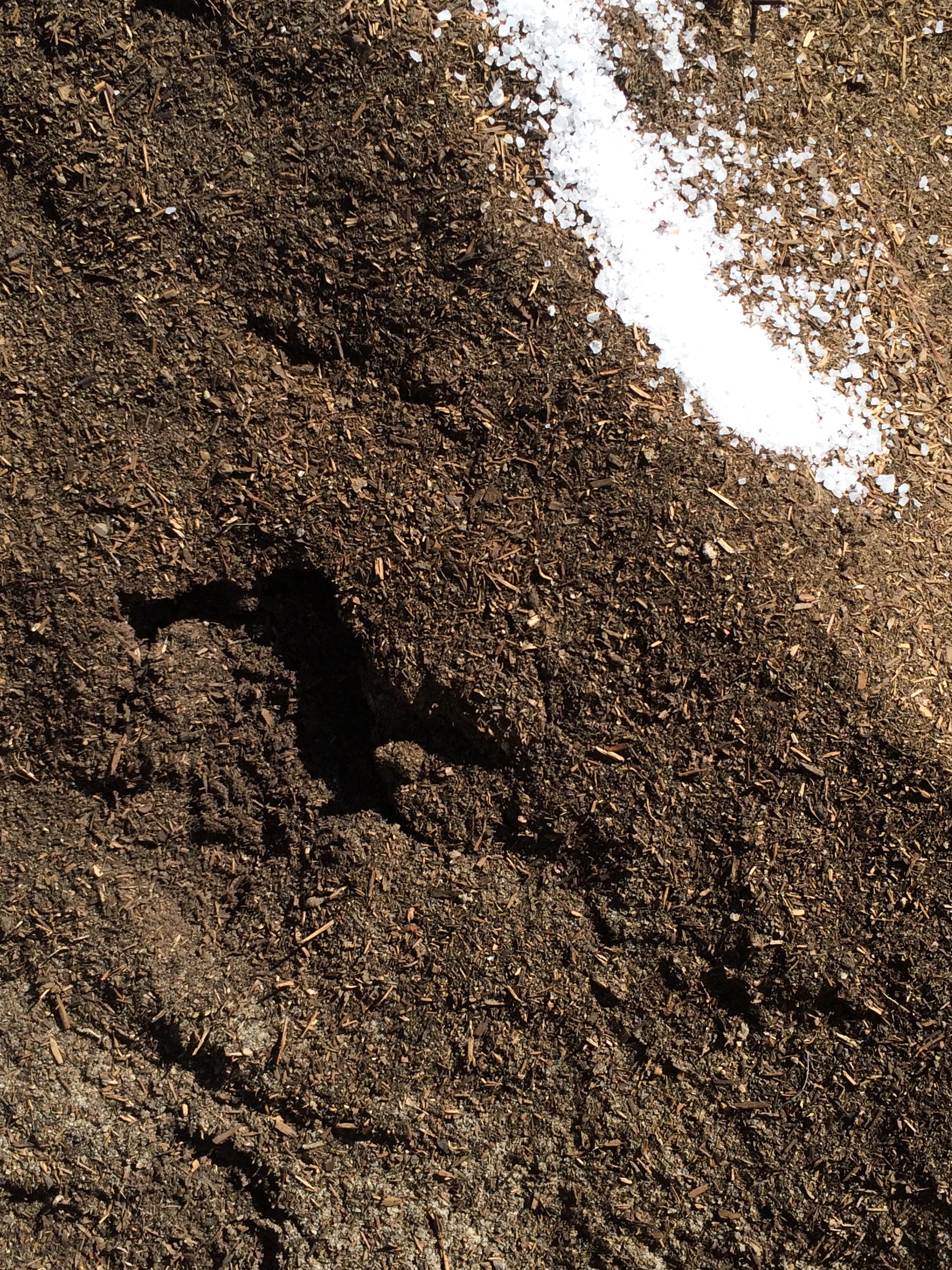Dirt&Salt.jpg
