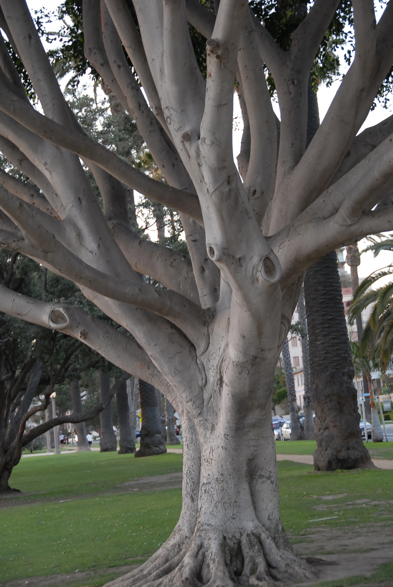 Luigia Martelloni Center Tree.jpg