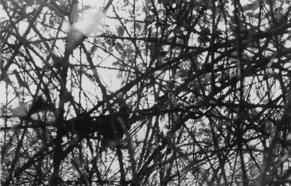 THROUGH THE TREE