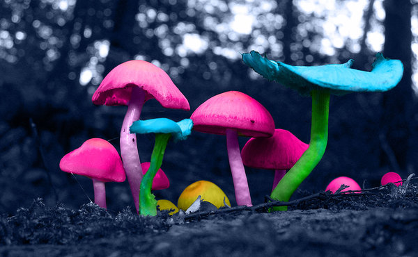 Magical Mushroom by Kaitlyn Fister via Behance.net
