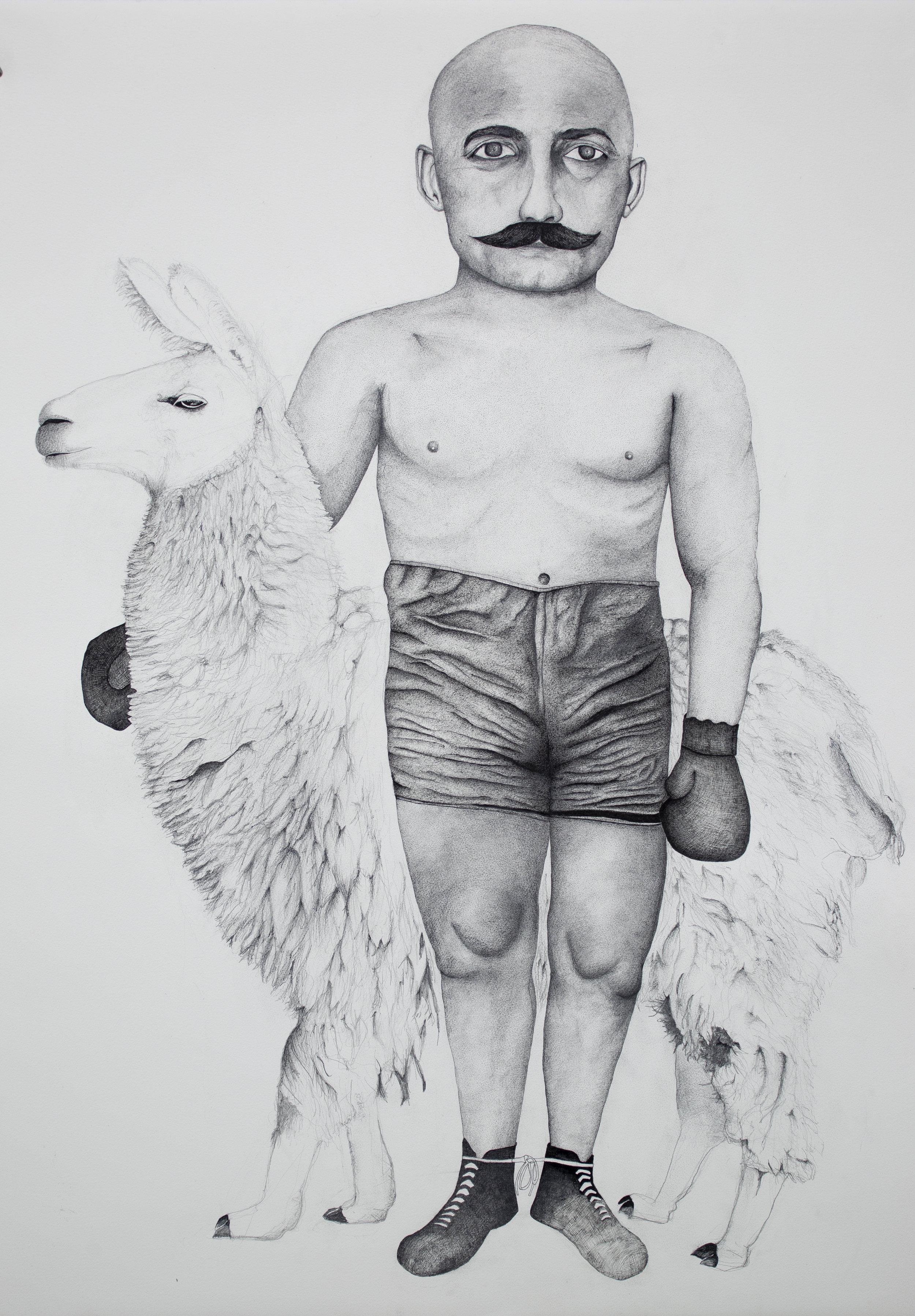 Boxer with Llama, 2018