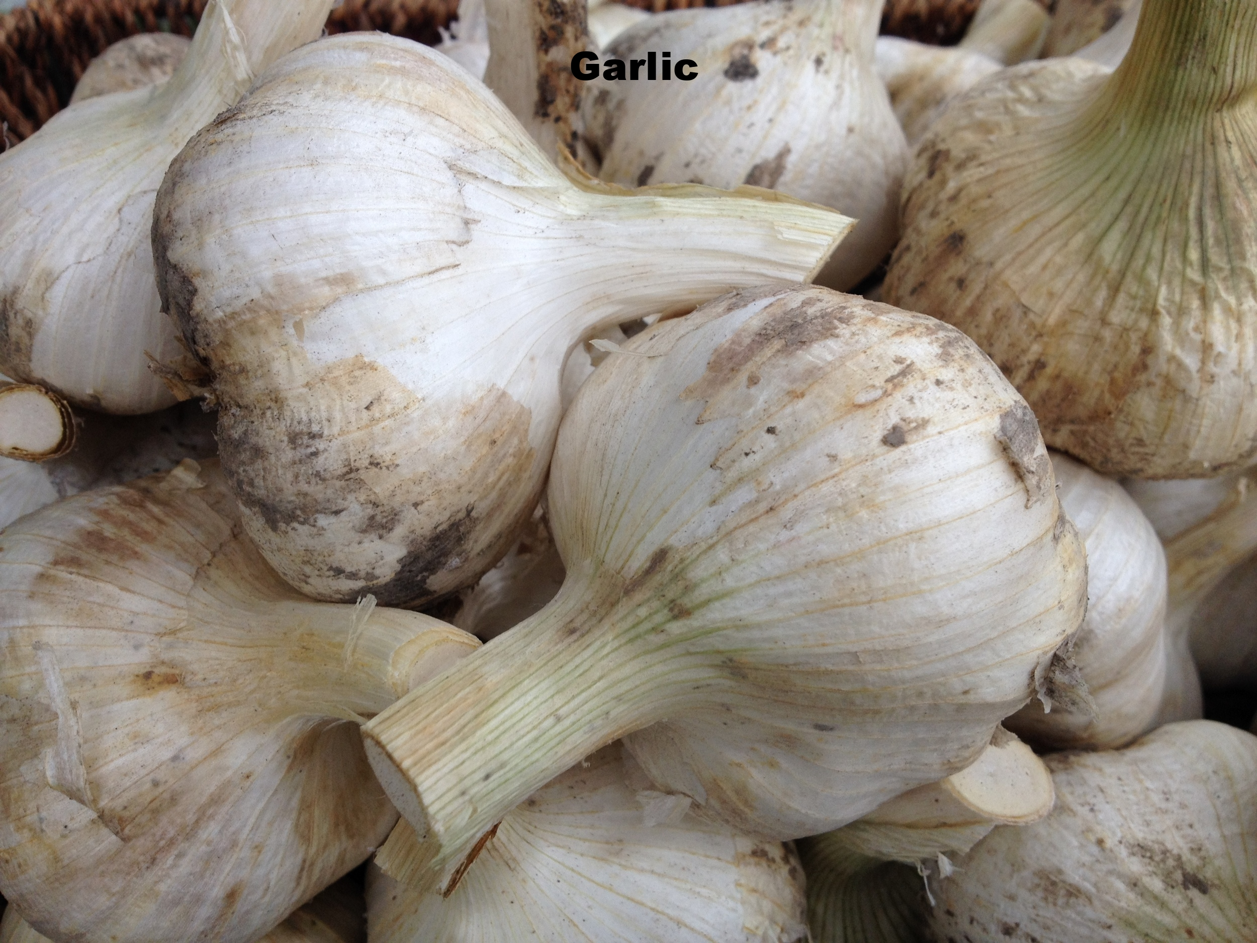 Seasonal fresh local Garlic