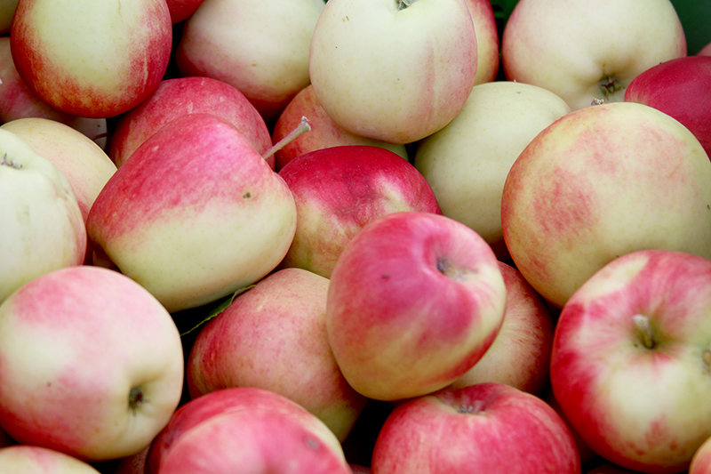 Apples - Grown and The Organic Food House