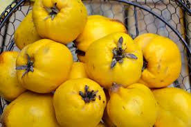 Quince - late summer