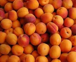 South Island Apricots - late summer