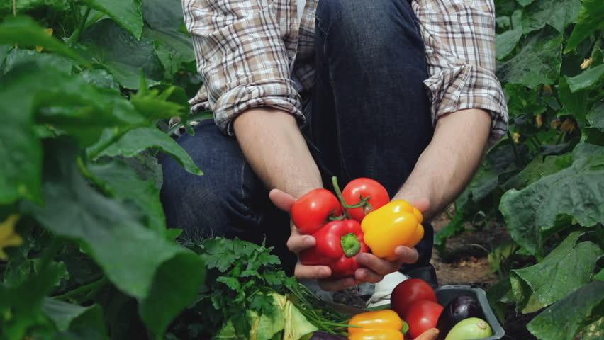 harvesttoms.jpg