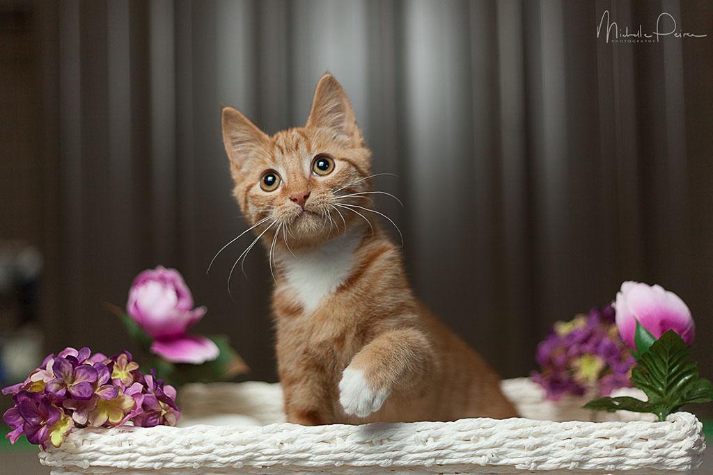 IMG_1134-rescue-kitten.jpg