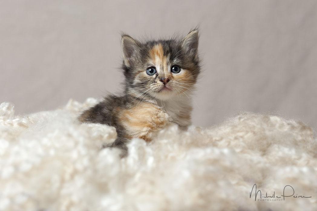 IMG_1688-kitten-photos.jpg