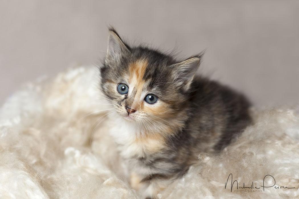 IMG_1694-kitten-photos.jpg