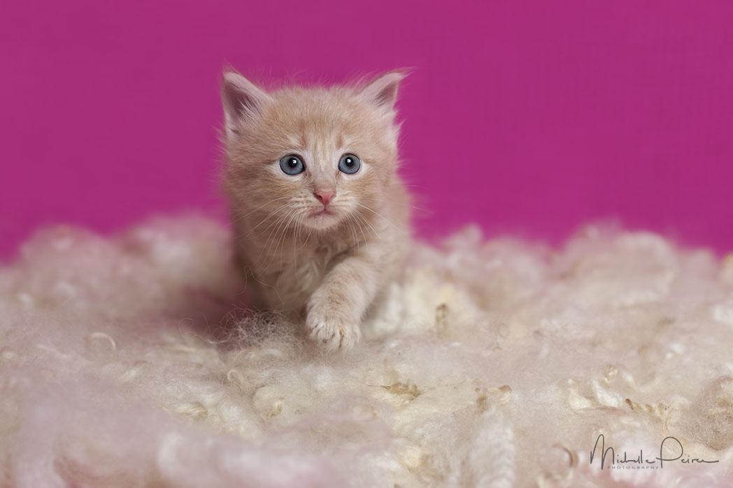 IMG_1696-kitten-photos.jpg