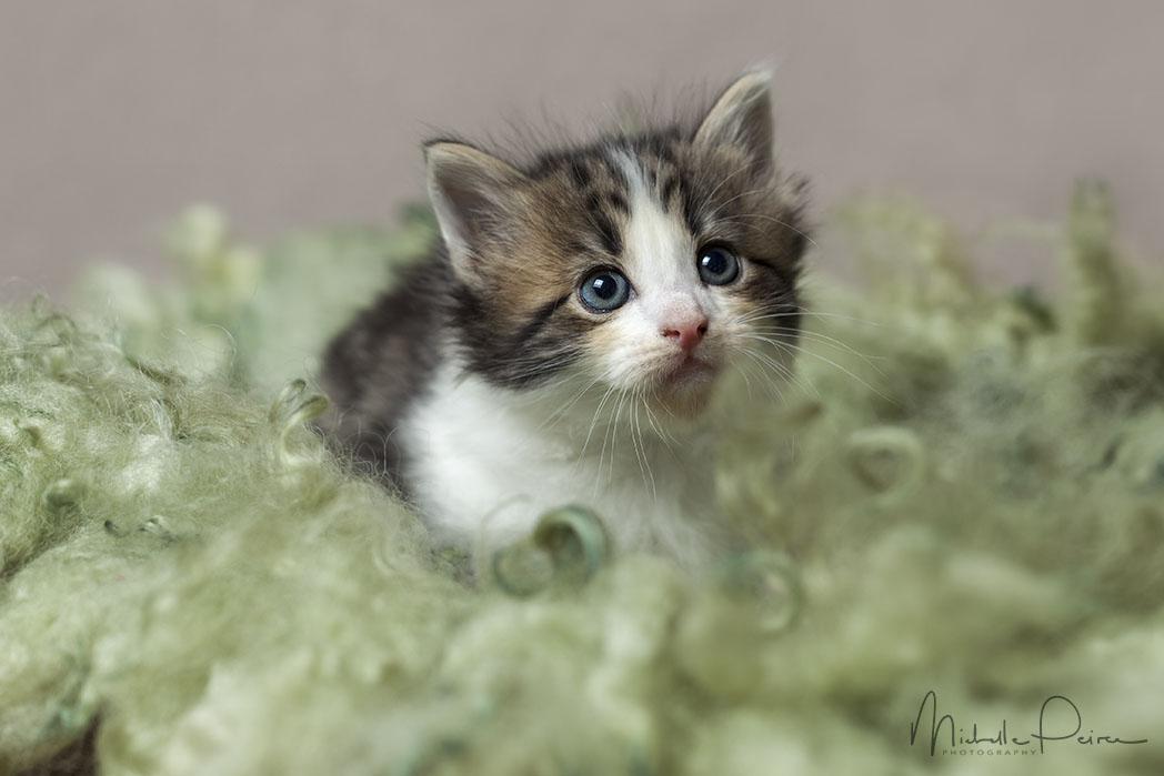IMG_1719-kitten-photos.jpg