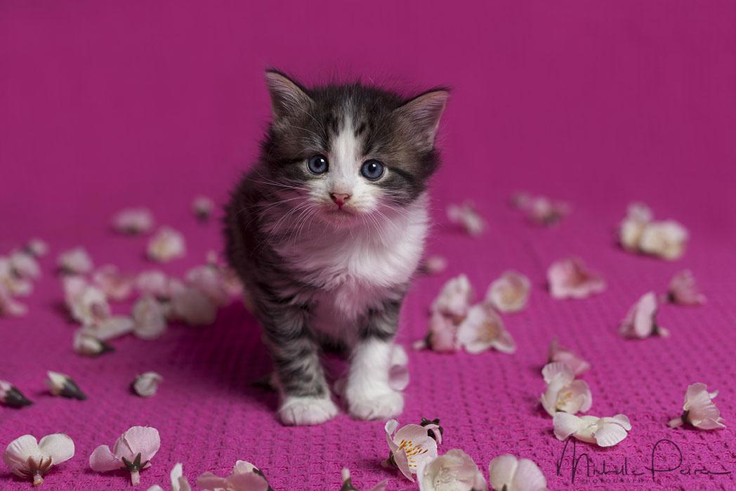 IMG_1726-kitten-photos.jpg