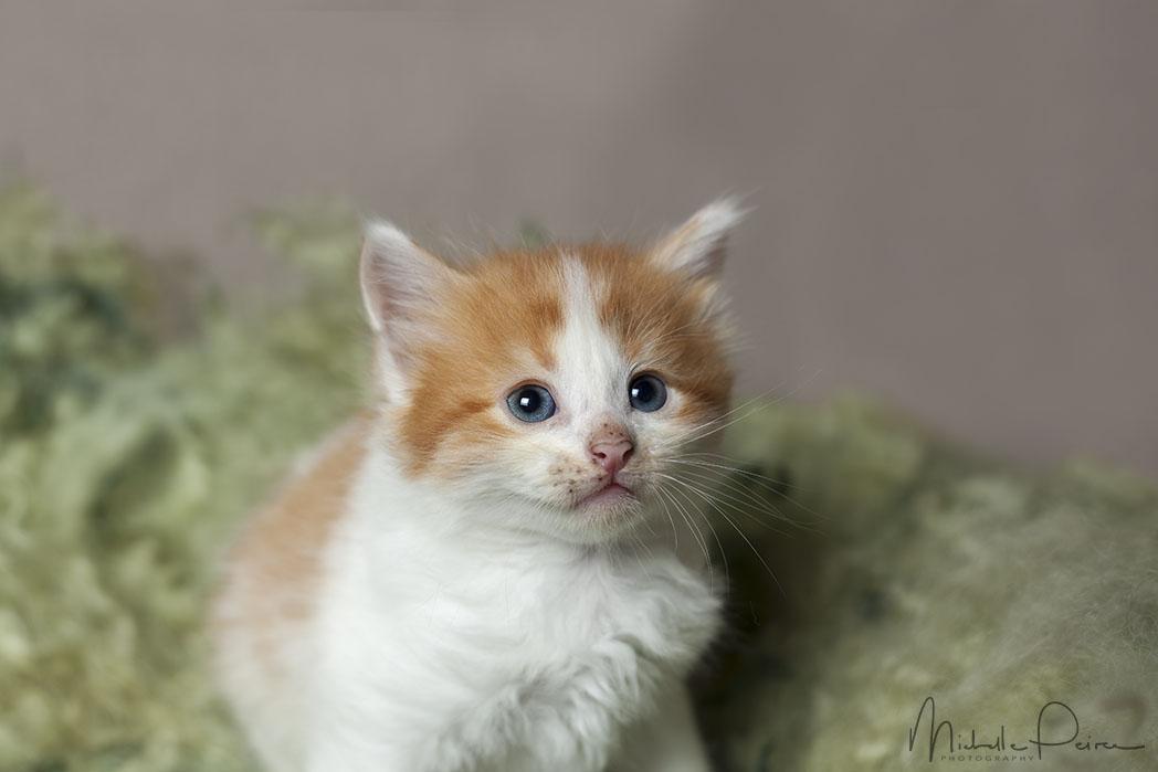 IMG_1733-kitten-photos.jpg