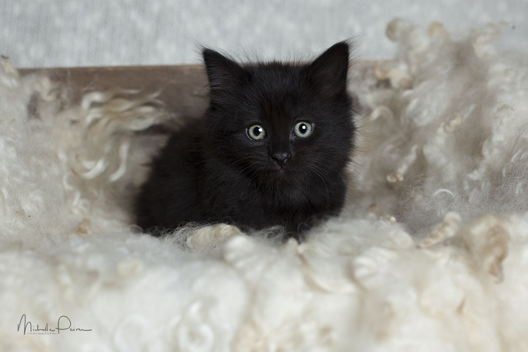 IMG_1870-Rescue-kittens.jpg