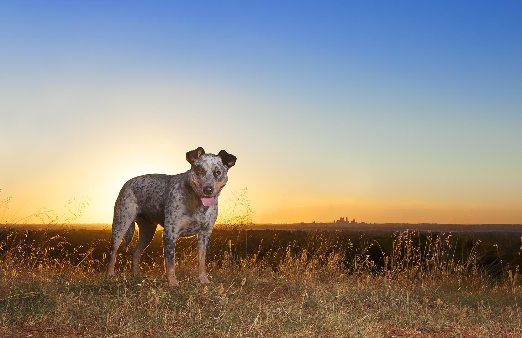 IMG_2320-sunset-dog-photos.jpg