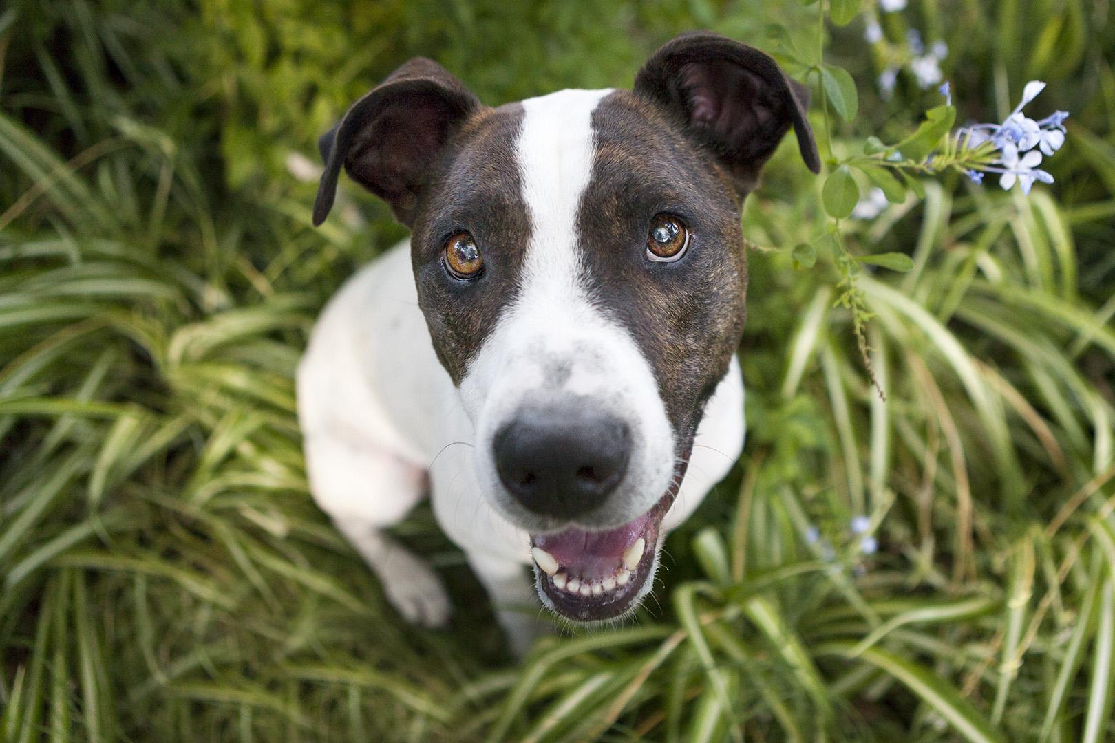 IMG_2429-dog face photos.jpg
