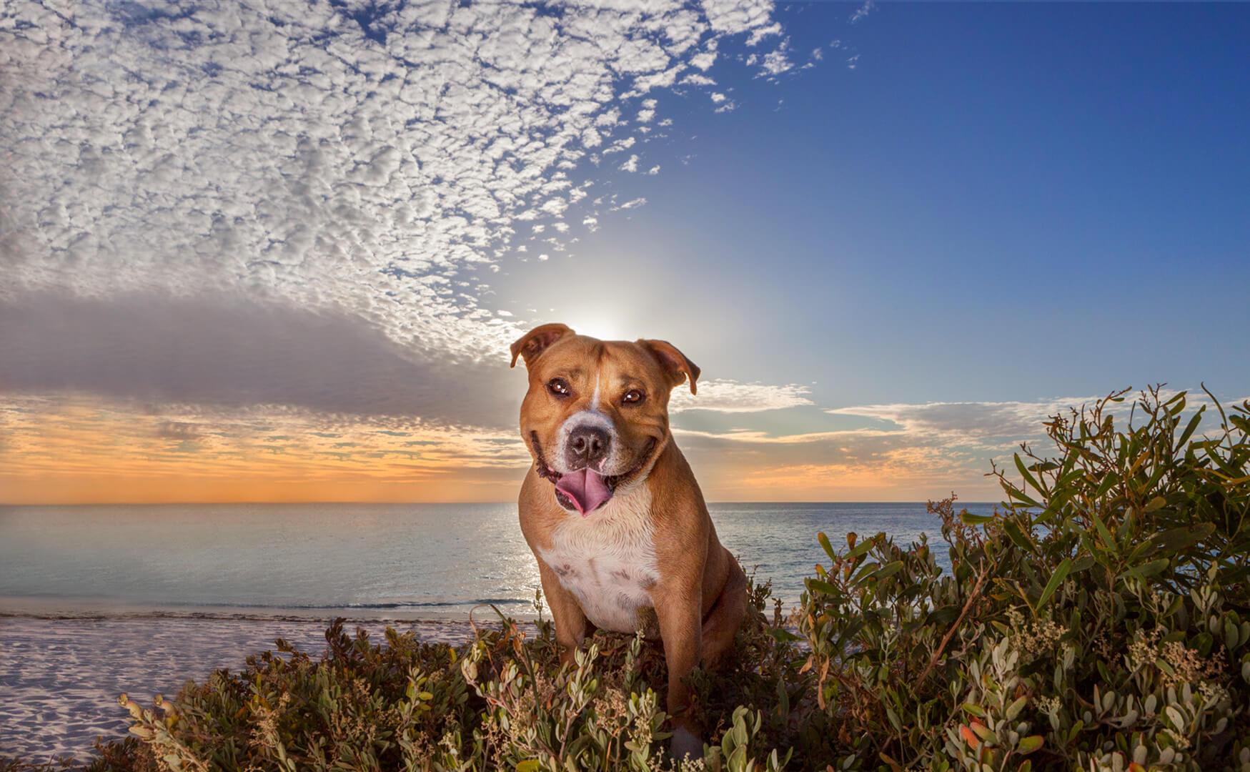 IMG_2550-beach dog.jpg