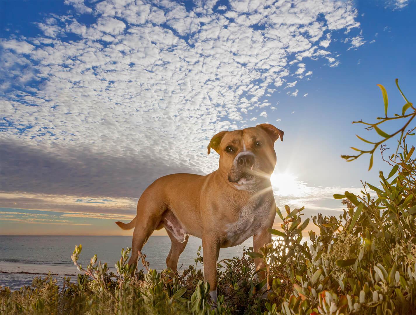 IMG_2552-beach dog photos.jpg