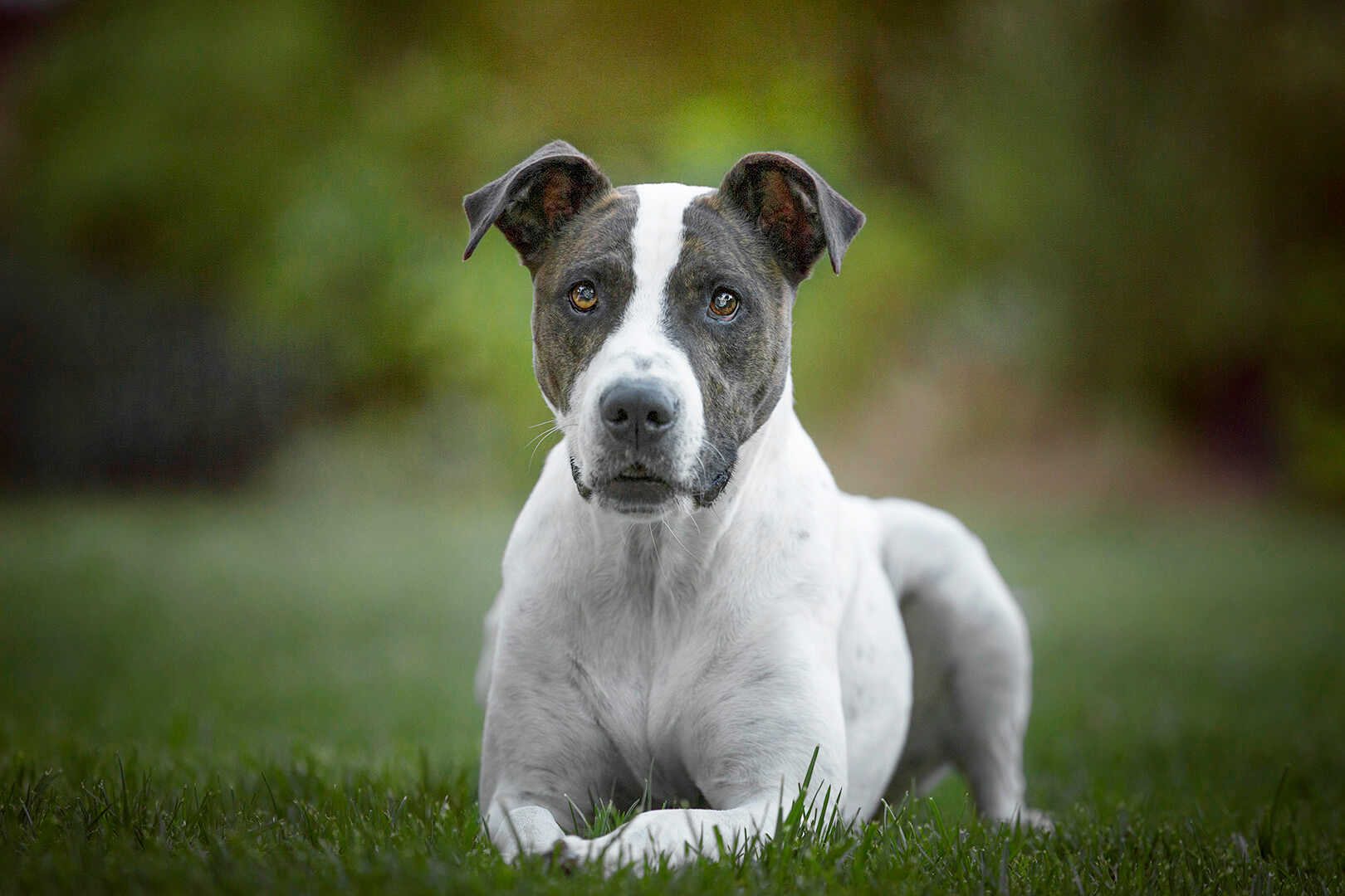 _PP_4943-best pet photos perth.jpg
