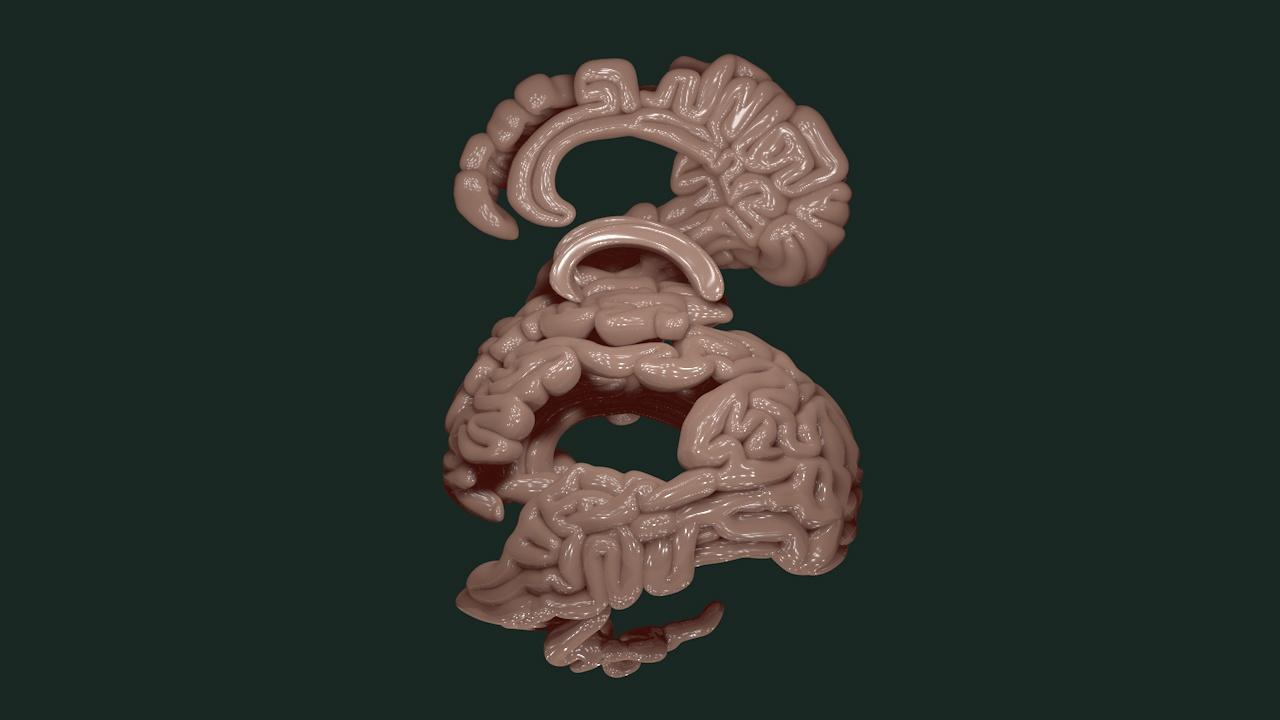 Brain 004-1.jpg