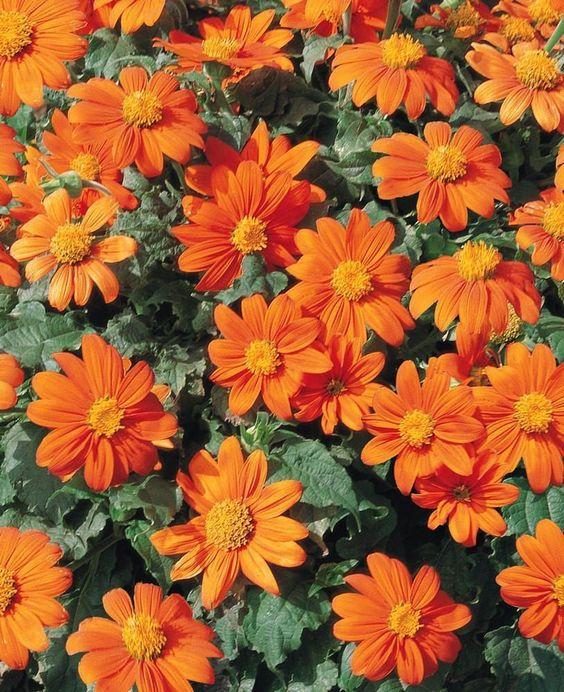 orange_flower.jpg