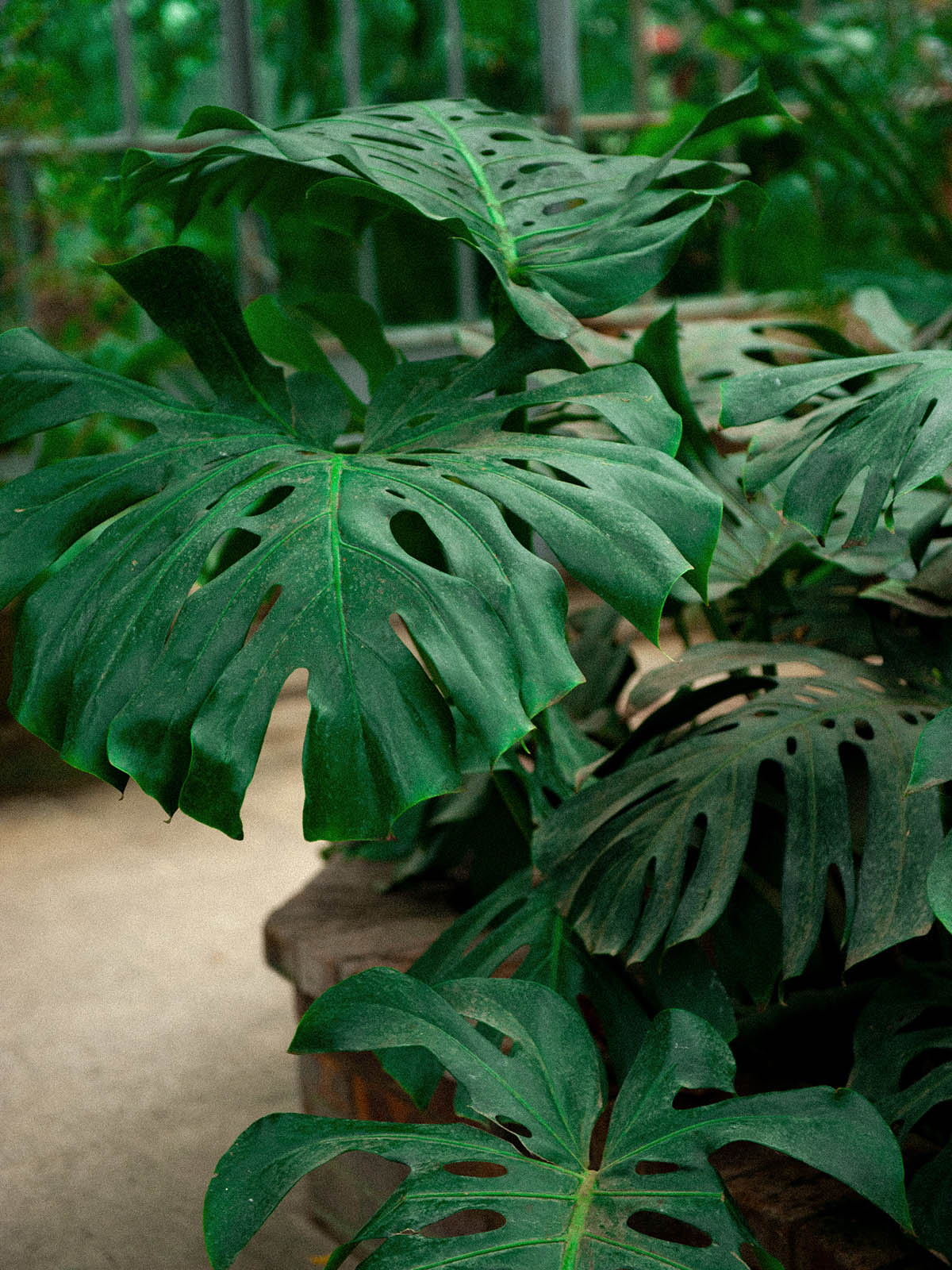 Serres_jardin_botanique_metz_lestatillonnes_bijoux_0008_Arrière-plan.jpg