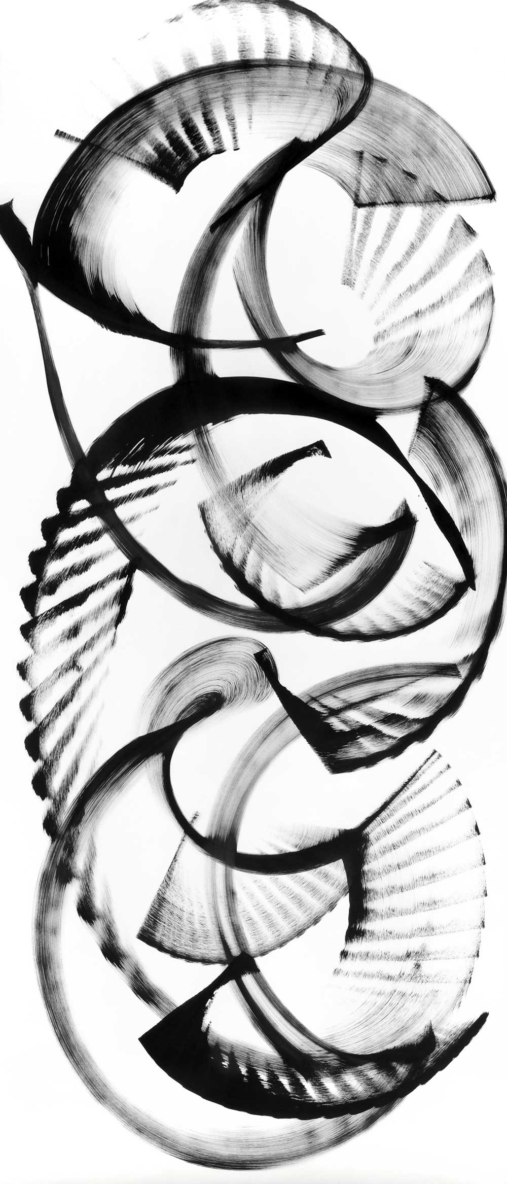 """Ochrosia nukuhivensis, ink on paper, 70"""" x 30"""""""