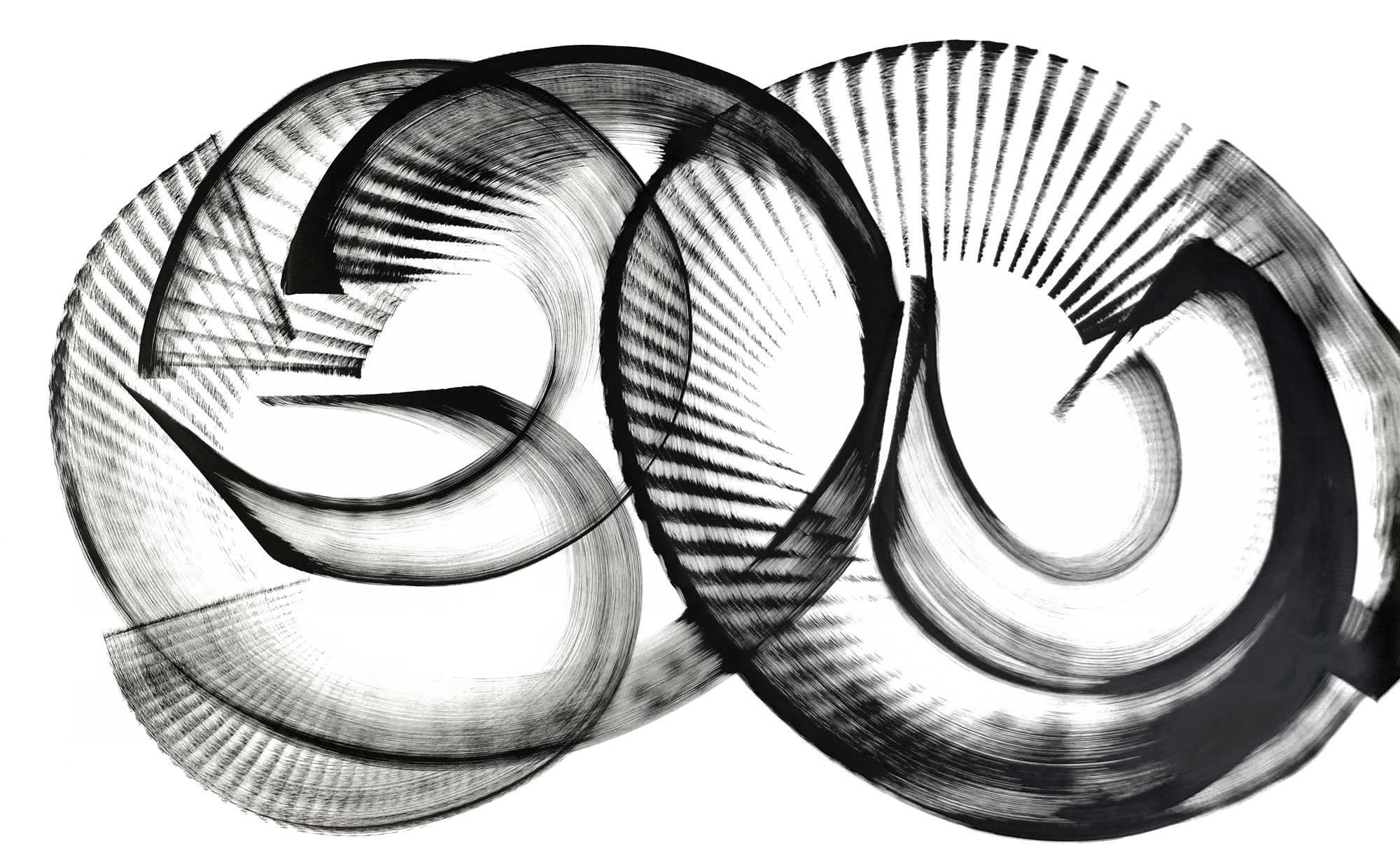 """Narthecium montanum, ink on paper,40"""" x 66"""""""