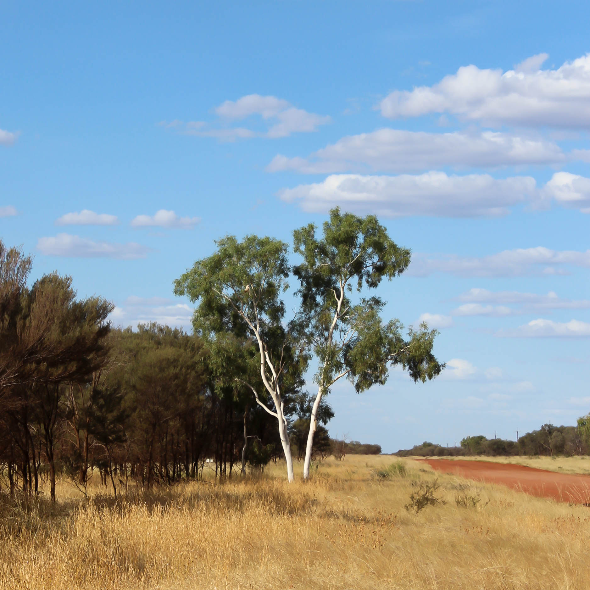 Australian Ghostgumtree Central Desert open road. My Country.  Bay Gallery Home Sourcing Trip.