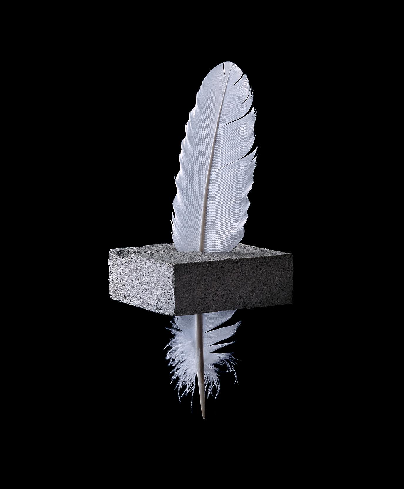 FeatherBlock-domlee.jpg