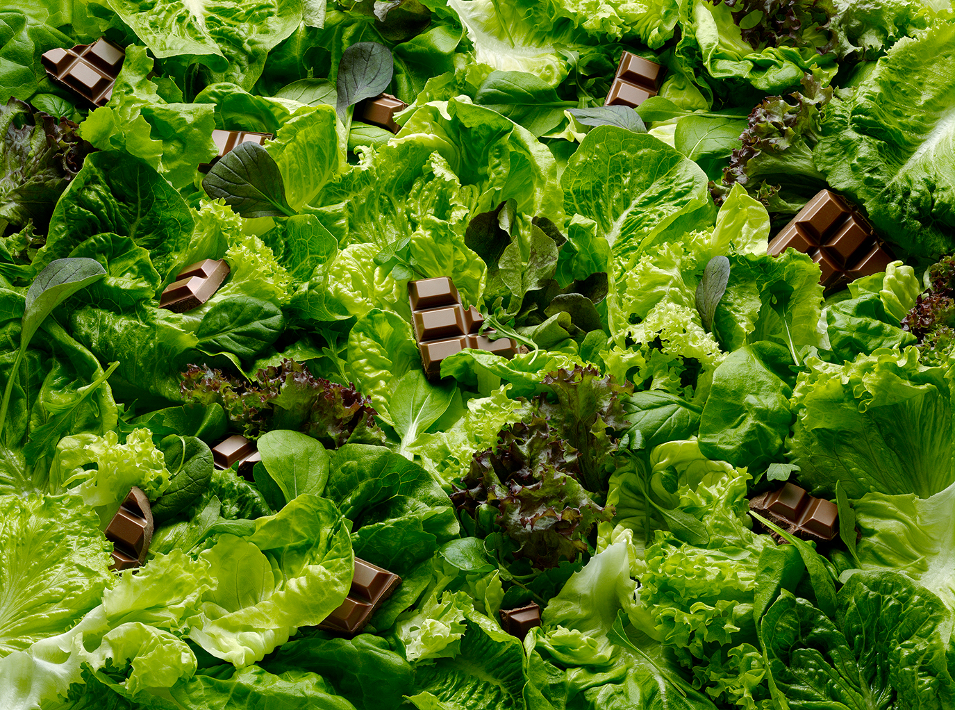 saladpitch-domlee.jpg