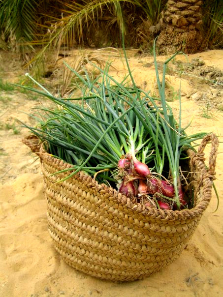Organic vegetables in Siwa Oasis